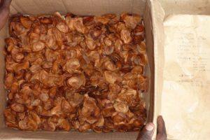 Graines d'acajou collectées avec la description du semencier sur l'enveloppe à droite