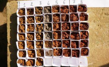 Échantillons de sols de différents profils pédologiques sur un site forestier